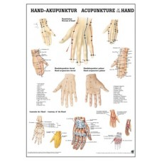 Acupuncture of the Hand chart