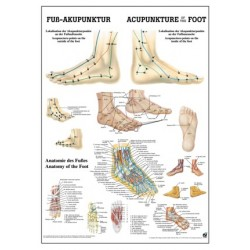 Acupuncture of the Foot