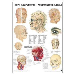 Acupuncture of the Head Chart