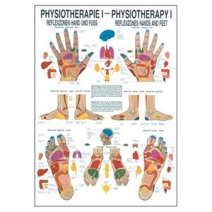 Reflexzones Hands and Feet Chart